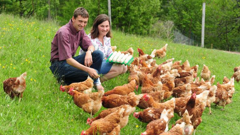 Glückliche Hühner am Bio-Hof Hinterwinkler